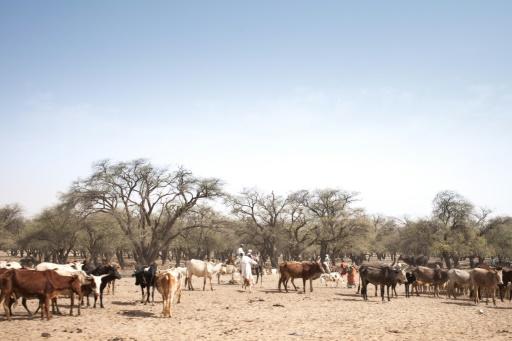 Etat d'urgence dans l'Est du Tchad après des violences intercommunautaires | Slate Afrique