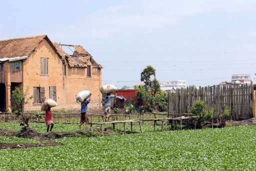 Des Malgaches travaillent à Andavamamba, à l'ouest d'Antananarive, le 5 novembre 2011 AFP/Archives Gregoire Pourtier