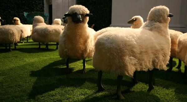 Actualités Algeriennes - Page 4 Moutons