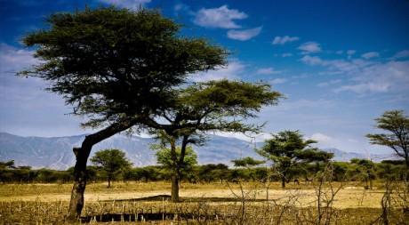 Sahel, by Fiseha Hailemichael via Flickr CC