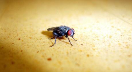 Fly, by orangeacid via Flickr CC