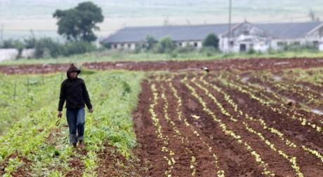 Un fermier sud-africain, le 15 février 2010. Reuters/Siphiwe Sibeko