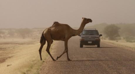 Tempête de sable à Ingal, Nord du Niger. REUTERS/Luc Gnago