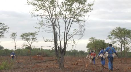 Maîtres-rats et rongueurs vont au champ de mines, Mozambique © Eugénie Baccot