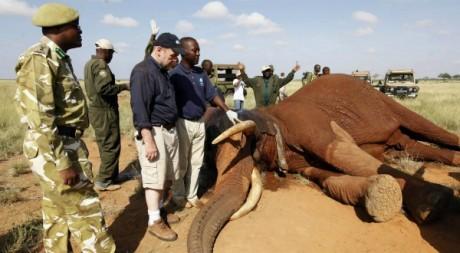 Des scientifiques de l'IFAW posent un collier GPS sur un éléphant au Kenya, le 15 mai 2011. REUTERS/JosephOkanga