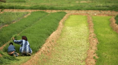 Agricultrice dans son champs à Todra, Maroc, mars 2009. © REUTERS/Rafael Marchante