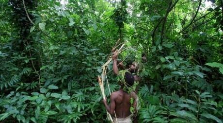 Une vue de la forêt ougandaise de Bundibugyo, août 2006 © REUTERS/James Akena