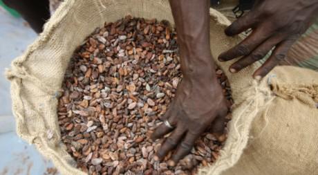 Un homme prépare des fèves de cacao à Daloa, en Côte d'Ivoire, 02/05/2012, REUTERS/Thierry Gouegnon