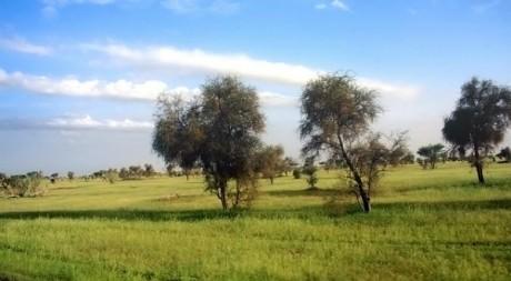 Une prairie en Mauritanie © Zain A.B/Flickr/CC