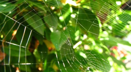 Web in the Wild, by fdecomite via Flickr CC.