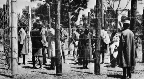 Des prisonniers Mau Mau dans la réserve de Kikuyu, octobre 1952. © AFP