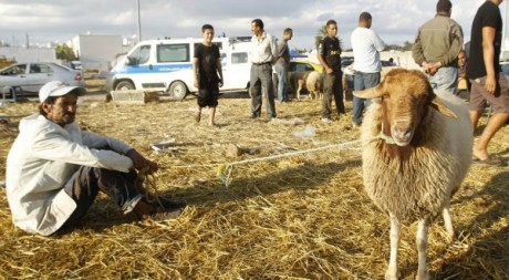 Moutons  Tunis le 25 octobre 2012. Reuters/Zoubeir Souissi