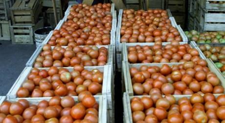 Caisses de tomates / Reuters