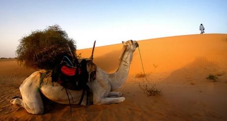 Chameau dans le désert, by Nicolafay via Flickr CC.