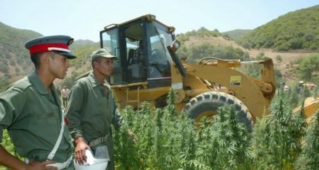 Destruction d'un champs de cannabis dans le Rif, Maroc, juillet 2005 / AFP