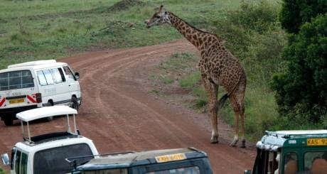 Réserve de Masaï Mara, Kenya, 2008 / REUTERS