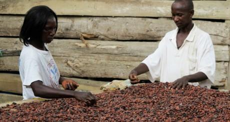 Fèves de cacao, 2012 / REUTERS