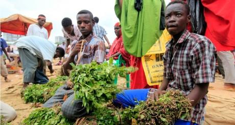 Vendeurs de khat somalien, 28 mai 2013, Mogadiscio / REUTERS