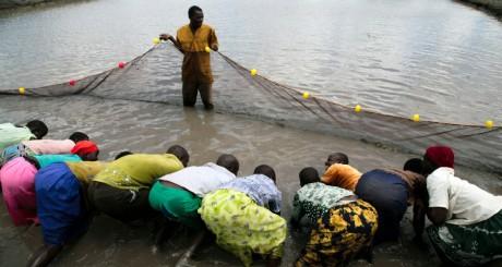 Ferme piscicole à Lira, Ouganda, 2007 / REUTERS