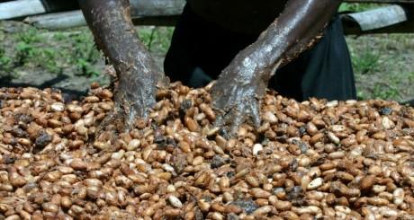 Séchage de cacao, Niablé / Reuters