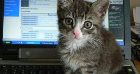 Midge cat and computer, by Dougwoods via Flickr CC