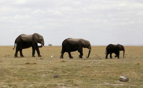Une famille d'éléphants dans l'Ambroseli National Park au sud-est du Kenya. Octobre 2013 REUTERS/Thomas Mukoya