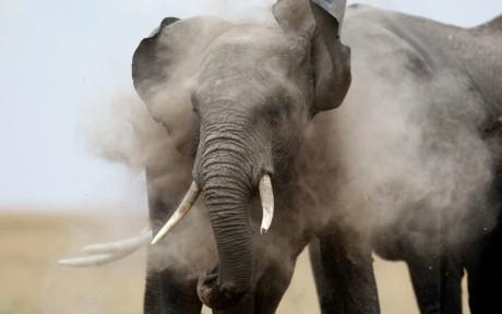 Eléphant du Kenya, REUTERS/Thomas Makoya