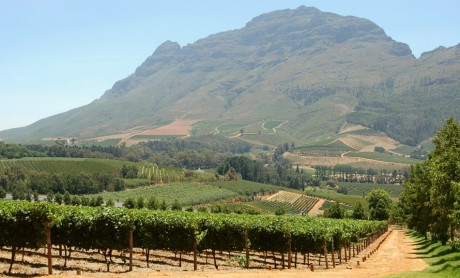 Les vignes de Delhaire en Afrique du Sud. REUTERS/Handout