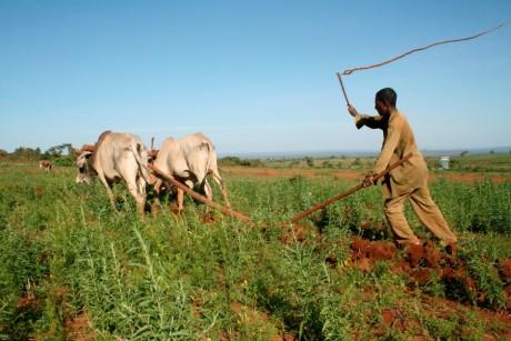 Un fermier Ethiopien, REUTERS/Alex Wynter