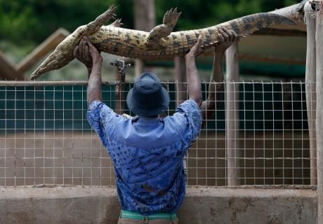 Un gardien de zoo en Afrique du Sud, REUTERS/Mike Hutchings