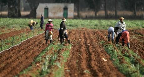 Ouvriers agricoles, près de Johannesburg , 2008. / Reuters