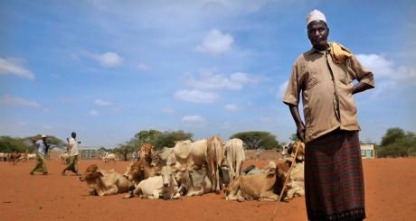 Un éleveur au marché de Wajir, Kenya / AFP