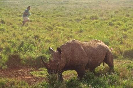 Un rhinocéros noir, le 20 mai 2015 au Kenya. Crédit photo AFP