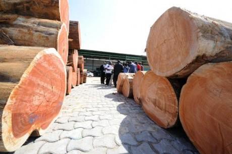 Accueil des visiteurs le 11 octobre 2012 à la Société Nationale des Bois du Gabon (SNBG) à Owendo, le port de Libreville AFP/Ar