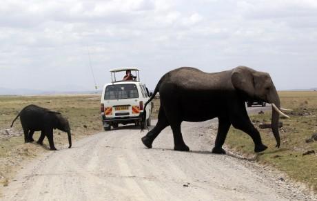 Des touristes admirent des éléphants dans le parc Amboseli, en 2013. Crédit photo: REUTERS/Thomas Mukoya