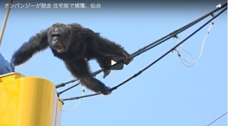 Capture d'écran de la vidéo de la télévision japonaise.