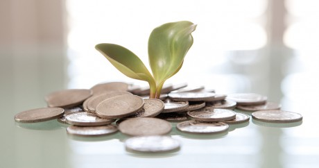 Money Plant. Crédit photo: Tax Credits via Flickr. CC BY 2.0