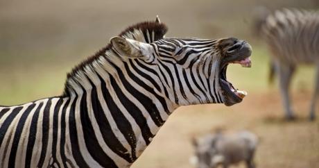Une mise en garde à prendre au sérieux. Crédit photo: Shutterstock via Flickr. CC BY