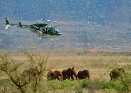 Des rangers équipent des éléphants de collier GPS dans le parc de Tsavo, le 15 mars 2016. Photo: AFP/Tony Karumba
