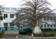 Heureux comme un étudiant à Dakar