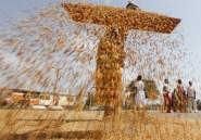 Du grain à moudre pour développer l'agriculture