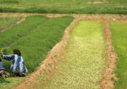 Le temps des révoltes paysannes
