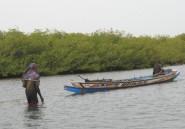 La mangrove, un bijou entre terre et mer