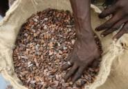 La Côte d'Ivoire sera-t-elle cigale ou fourmi?