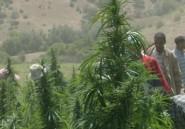 Comment le Maroc est devenu le royaume de l'herbe