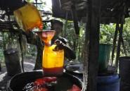 Huile de palme: inquiétudes pour l'or rouge