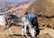 Lexique des idées reçues sur le Maroc