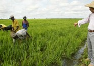 Sen-Ethanol, un projet agricole controversé