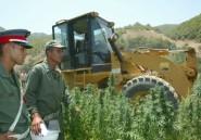 Le trafic de drogue, la plaie des pays du Maghreb