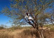 Cette révolte paysanne qui veut faire tomber le régime soudanais